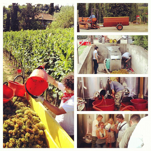 Harvest Time at Agriturismo Guardastelle, Destination Wedding Venue (Villa), Tuscany, Italy